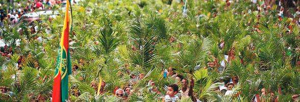 ramos-palmeira-pascoa